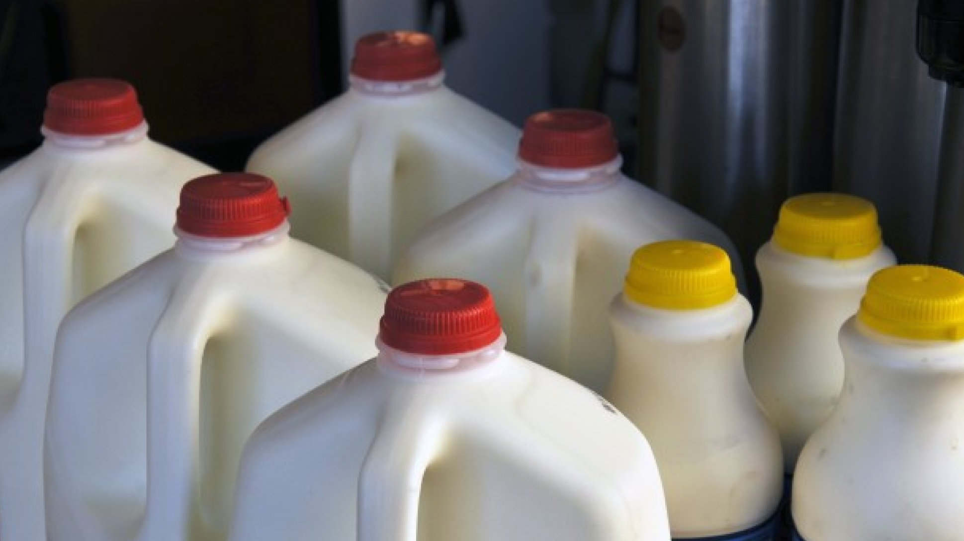 Bottles of milk